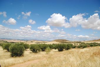 Paisaje de la Vega del Henares