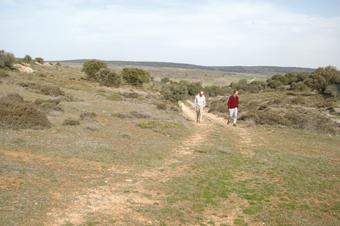 Camino de Alcolea del Pinar