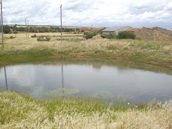 Otilla, el Navajo