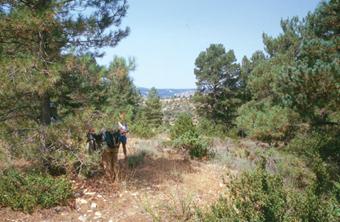 Camino de Peralejos de las Truchas