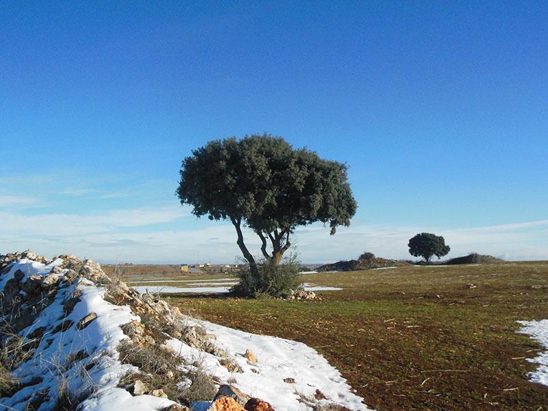 Nieve en la Alcarria